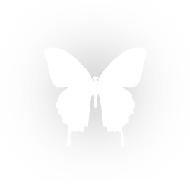 logo-2656